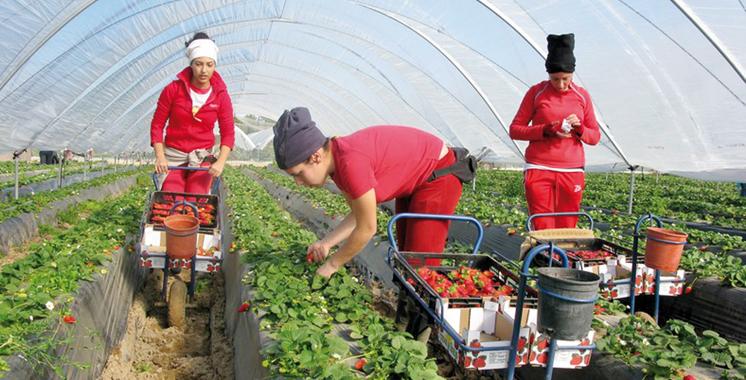 Fraises-Travailleurs-saisonniers-marocains-Espagne
